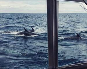 Eventura-Despedidas-soltero-en-Gijón-Asturias-actividades-agua-paseos-barco-gijon-13